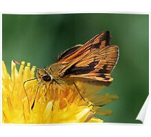 The Hesperiidae Butterfly Poster