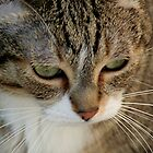Whiskers by Stephen Thomas