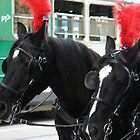 City Horses, Melbourne by Maggie Hegarty