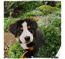 Puppy Art - Little Lily Poster