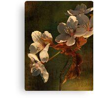 Spring Memory Canvas Print
