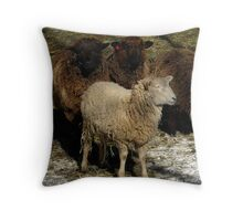 One of These Sheep is NOT Like The Others, One of These Sheep Just Isn't the Same... Throw Pillow