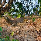 Monitor Lizard by bettyb