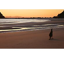 Kangaroo Sunrise Photographic Print