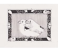 Dom's Finches Photographic Print