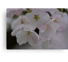 Spring is Pink Canvas Print