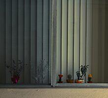 Plants on the Window Sill by noaheberhart