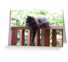 Kitty on deck Greeting Card