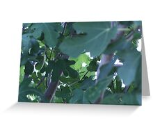 Fig Leaves! Greeting Card