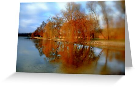 Reflected trees by i l d i    l a z a r