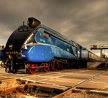 Bittern at Exeter St Davids  by Rob Hawkins