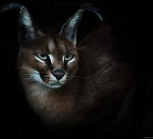 Caracal by Intombazana