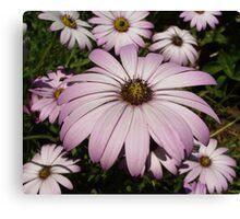 Purple Anemones Canvas Print