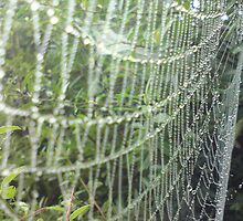 morning web by Sally Carter