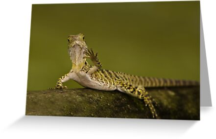 Hi There by Craig Hender