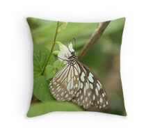 The butterfly from the South East Asia Throw Pillow