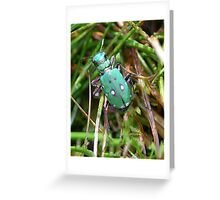 Green Tiger Beetle Greeting Card