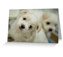 Puppy Stare Greeting Card