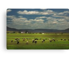 Killarney Dairy Cattle © Vicki Ferrari Photography Canvas Print