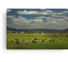 Killarney Dairy Cattle © Vicki Ferrari Photography Canvas Print