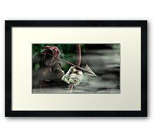 Robin the Hooded Man - Sherwood Forest, Robin Hood, Archer, Nottingham Framed Print