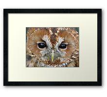 Female Tawny Owl Framed Print