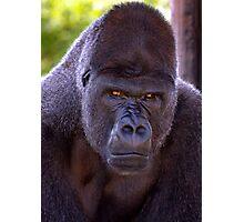 Sour Apes Photographic Print