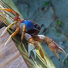 Land Crab by djprov
