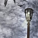 The Bats Come Out At Night by Kimberly Palmer