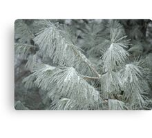 Frosty Transformation - With Sugar on Top Canvas Print