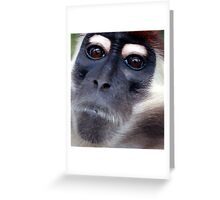 Feisty Greeting Card