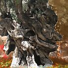 Olive tree by 4Flexiway