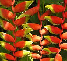 strange flowers by mariondixon