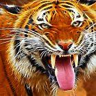 Fierce Tiger by kkgivens