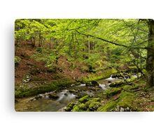 Valserine river in Haut Jura Natural Park Canvas Print