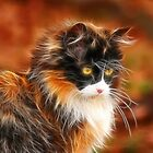 Calico by Sharon Morris