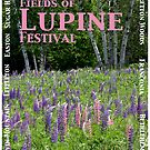 Fields of Lupine Festival by Wayne King
