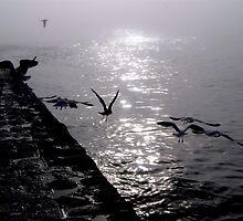 Take Flight by Richard Hamilton-Veal