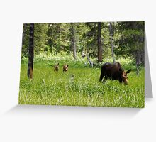 Moose and Calves Greeting Card