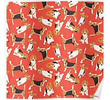 beagle scatter coral Poster