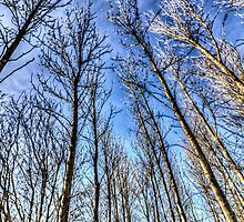 Reaching For The Sky by DavidHornchurch