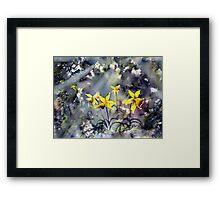 Daffodils of Hope Framed Print