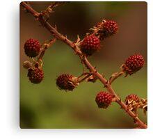 Rubus Species Canvas Print