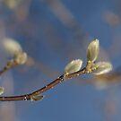 Focus on Spring by SpiritFox