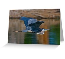 Great Blue Heron 11 Greeting Card