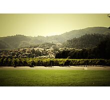 Napa Vineyard Photographic Print