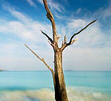 Cinnamon Bay Tree by Nathan Lovas Photography