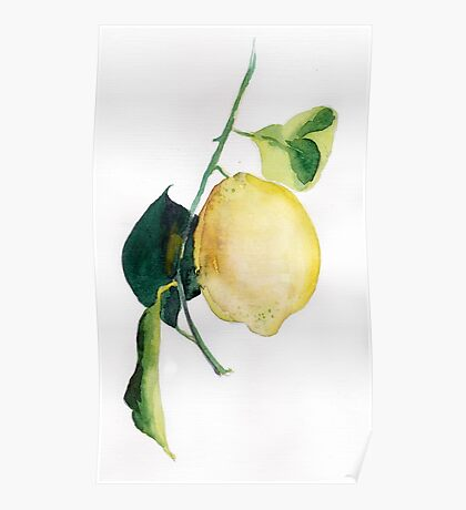 Branch of  lemons with leaves Poster