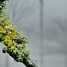 Moss in the Mist by relayer51