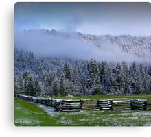 Morning Fog in Trees Canvas Print